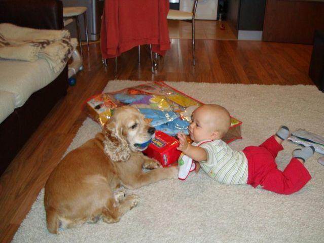 Куче, дай топката